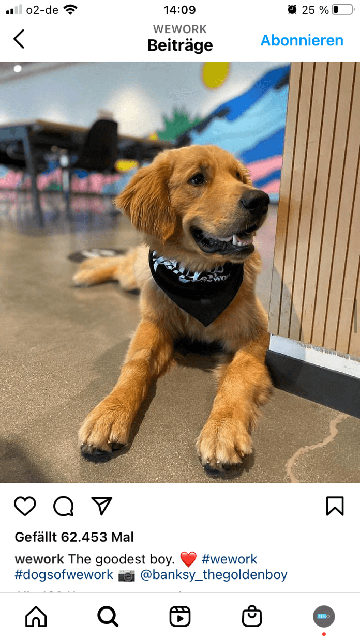 Instagram-Marketing-dogsofwework kampagne