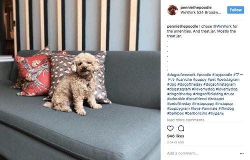Instagram-Beiträge anderer Benutzer
