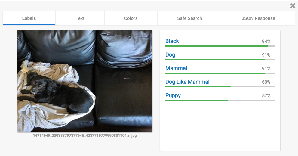 Cloud Vision API Test – Hund