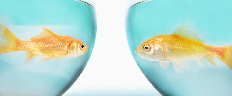 Das Goldfisch-Dilemma: Inhalte für kurze Aufmerksamkeitsspannen