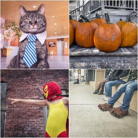 Websites für kostenlose Stock-Fotos – Gratisography