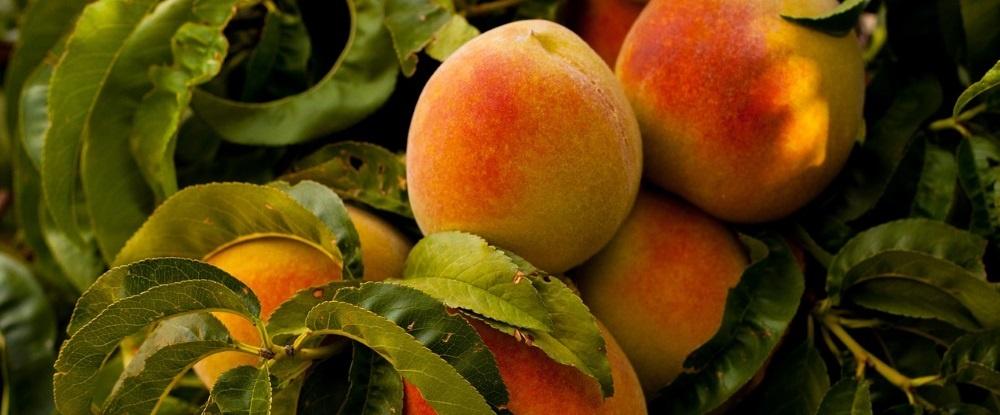 Buyer's Journey Beispiel: Pfirsiche