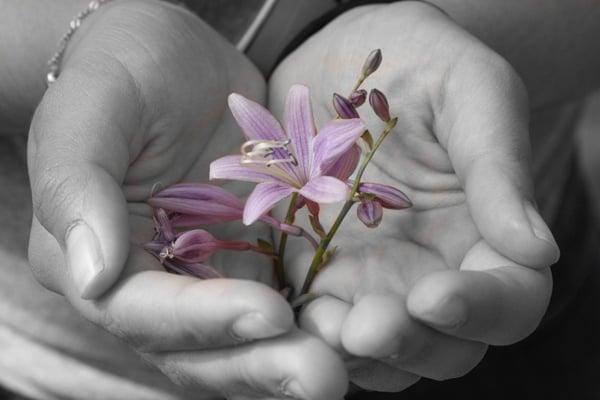 HubSpot-Mit Schwarzweiß-Effekt teilkoloriertes Handyfoto einer violetten Blüte in den Händen einer Frau