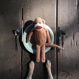HubSpot-Hund-vor-Teller-mit-Hundespielzeug
