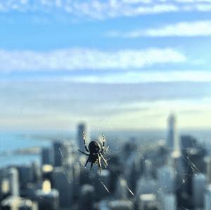 HubSpot-Spinne-mit-verschwommener-Skyline-im-Hintergrund