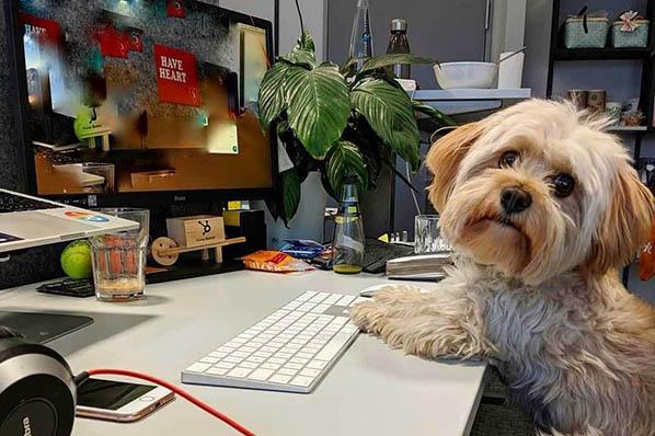 Hund im Büro: Warum jeder einen Bürohund haben sollte