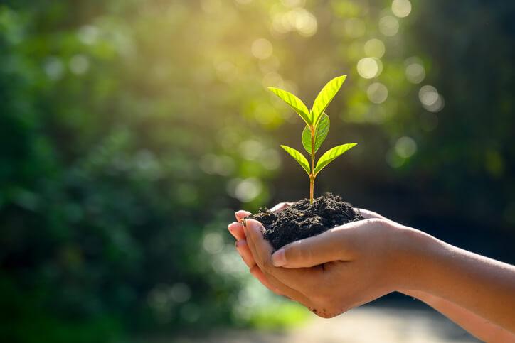 Hände halten spriessende Pflanze