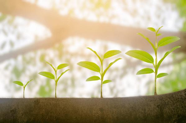 Reichweite ausbauen: So geht Content-Seeding